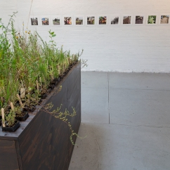 Heather Hesterman, Fieldwork,Ovens and Merri, Red Gallery