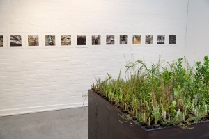 Heather Hesterman, Fieldwork, Ovens and Merri, Red Gallery
